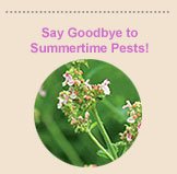 Say Goodbye to Summertime Pests!