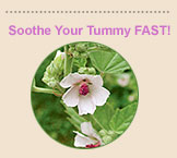 Soothe Your Tummy FAST!