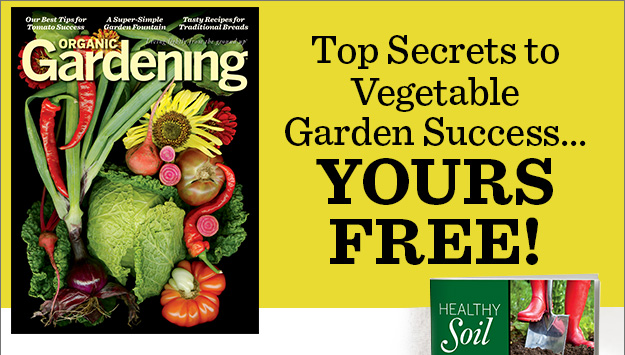Top secrets to vegetable garden success... yours FREE!