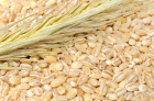 Barley: the Wonder Grain